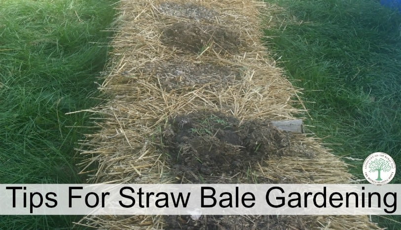 Straw Bale Gardening Instructions For A Great Weed Free Garden * The ...