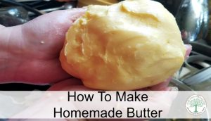 Creamy goodness, full of healthy fat, BUTTER is the perfect food! Learn to make homemade raw milk butter yourself easily! The Homesteading Hippy
