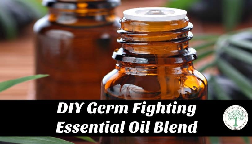 Make your own germ fighting blend of anti-bacterial essential oils! The Homesteading Hippy
