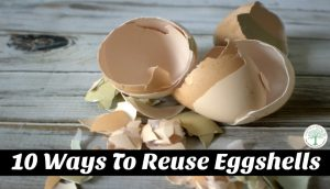 Learn 10 great ways to reuse your eggshells! From compost to candles, we have the idea for you! The Homesteading Hippy