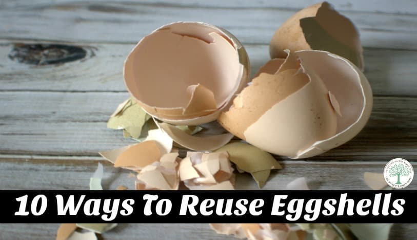 Learn 10 great ways to reuse eggshells around your home! From compost to candles, we have the idea for you! The Homesteading Hippy