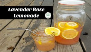 Delicious and refreshing! Try this lavender rose lemonade today! The Homesteading Hippy