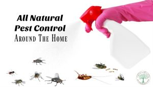 Chemical Free Pest Control Around The Home