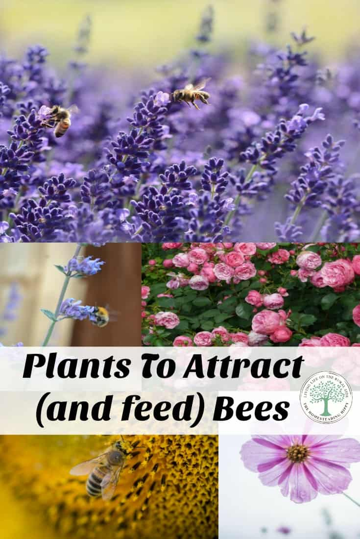 Help save the bees! Here is a list of plants that attract bees to consider planting. The Homesteading Hippy