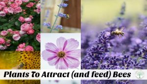 List Of Plants That Attract {and feed!} Bees