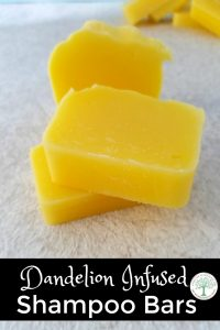 When dandelions are popping up, use some of them to make this luxurious shampoo bar! The Homesteading Hippy