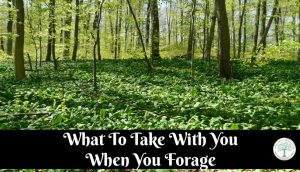 Foraging For Wild Edibles-What To Take With You