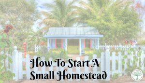 Starting A Homestead From Scratch With A Homestead Plan