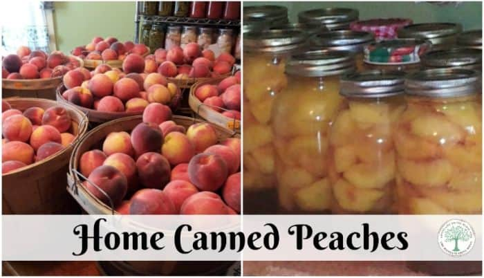 canned peaches post