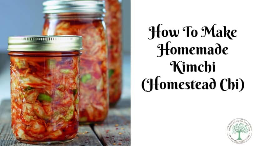 Homemade kimchi is delicious! Learn how to make this by fermenting naturally! The Homesteading Hippy
