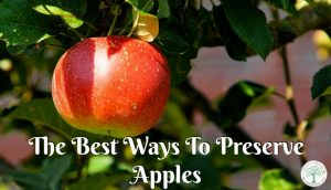 Best Ways To Preserve Apples {4 Ways To Get Started!}