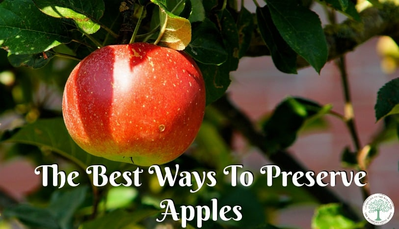 Preserving apples in season is a great way to have delicious fruit on hand all the time! Here are some of the best ways to preserve apples. The Homesteading Hippy