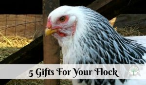 5 Amazing Gift Ideas For Chickens post