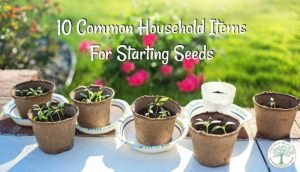 10 Easy DIY Seed Starters From Common Household Items