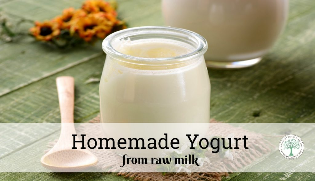 Homemade raw milk yogurt is so easy and will give you the benefits of probiotics AND the nutrients in the raw dairy! The Homesteading Hippy