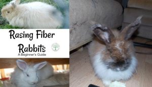 fiber rabbits featured