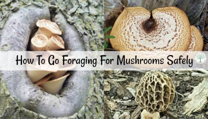 foraging mushroom safely