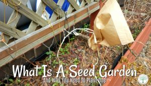 How to Plant A Seed Garden-A Garden Everyone Should Grow