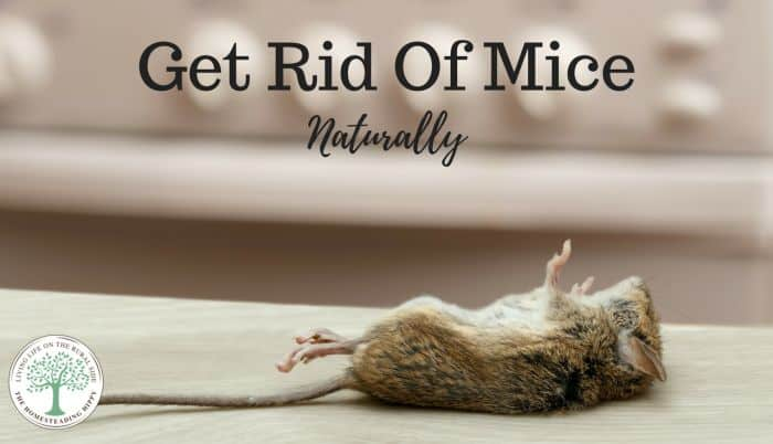 Get Rid Of Mice