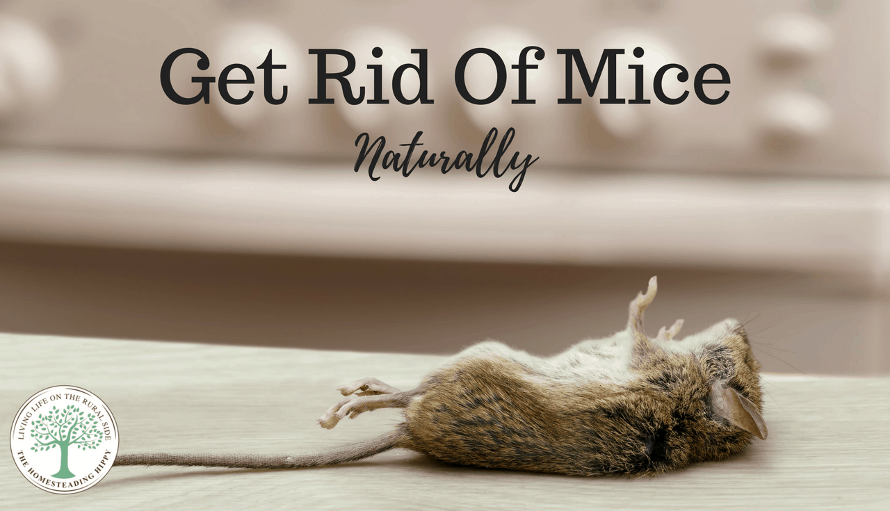 How Can I Get Rid Of Mice Naturally