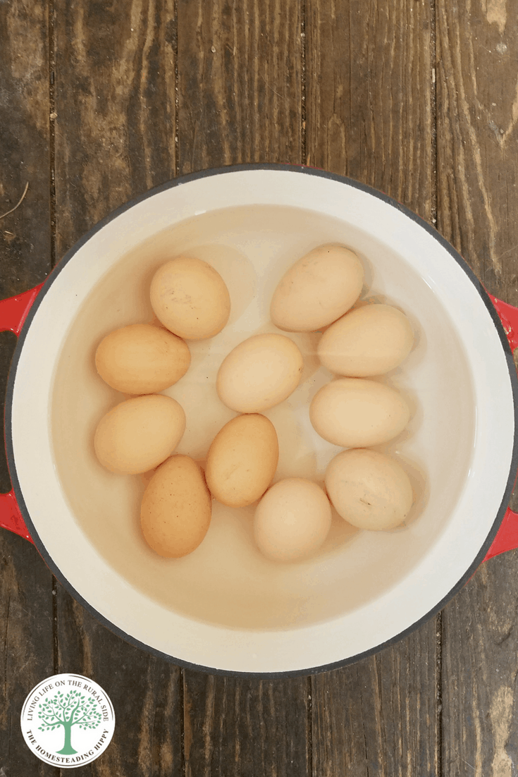 Who loves hard boiled eggs? Here are 3 easy ways to get your hard boiled eggs fix on a regular basis! The Homesteading HIppy