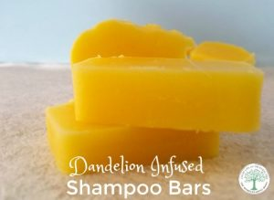 dandelion infused shampoo bars