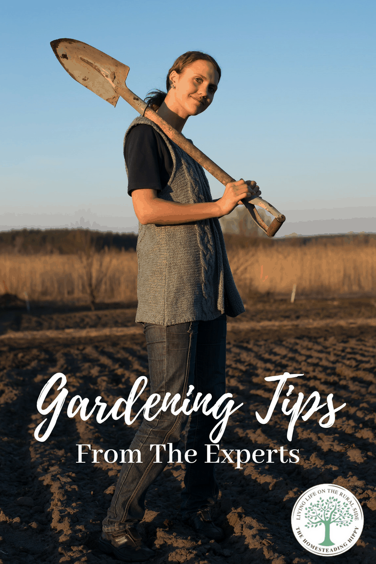 Want to get the most of out of your garden this year? Here's some advice that will give you all the gardening tips and tricks for beginners that the experts wish THEY had in the beginning!