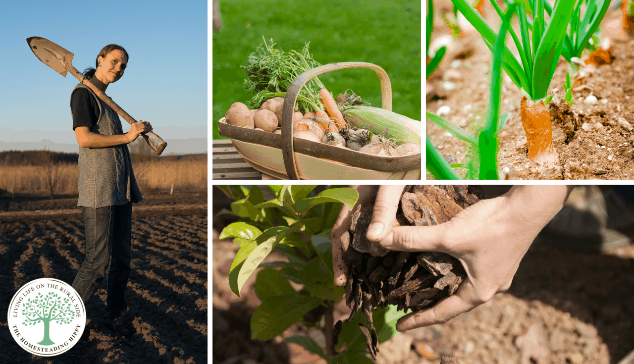 Are you wanting to get the most of out of your garden this year? Here's some advice that will give you all the gardening tips and tricks for beginners that the experts wish THEY had in the beginning!