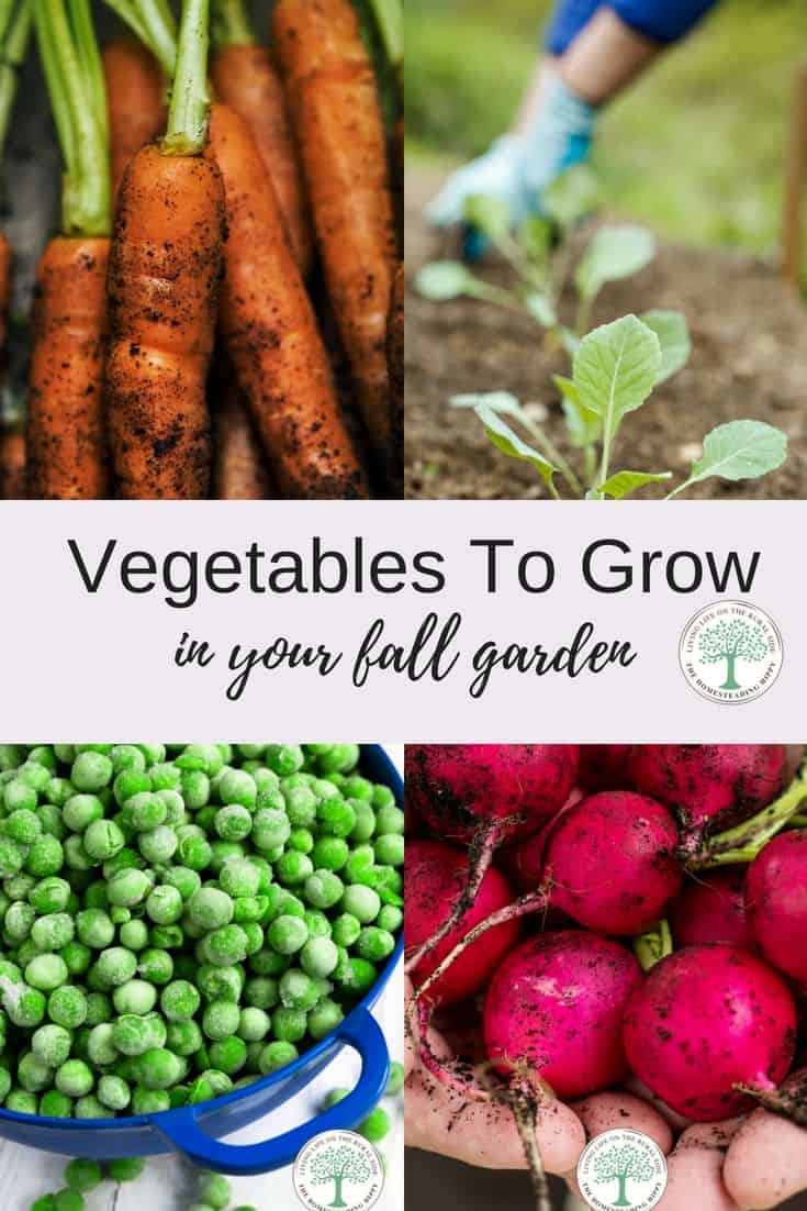 garden vegetables to grow
