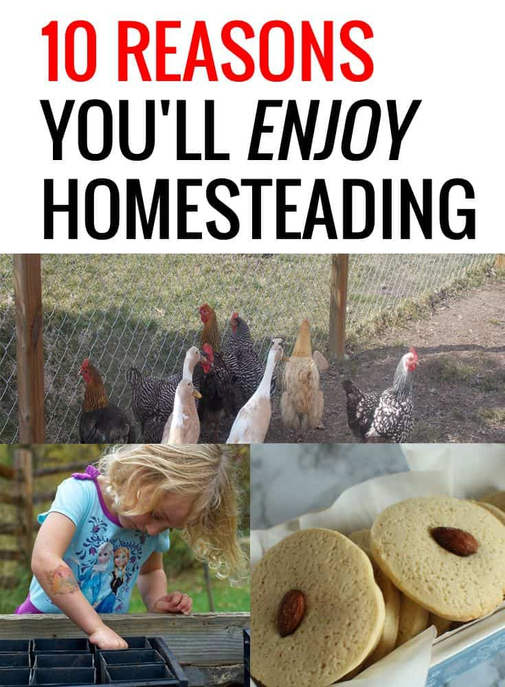 enjoying homesteading pin
