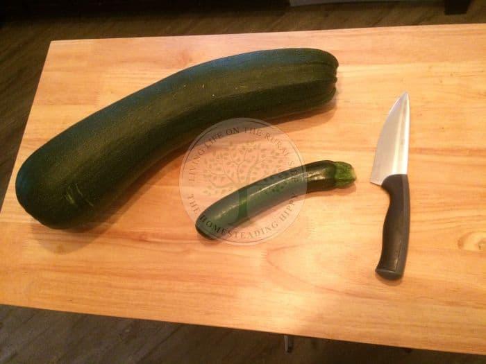 Ripe Zucchini