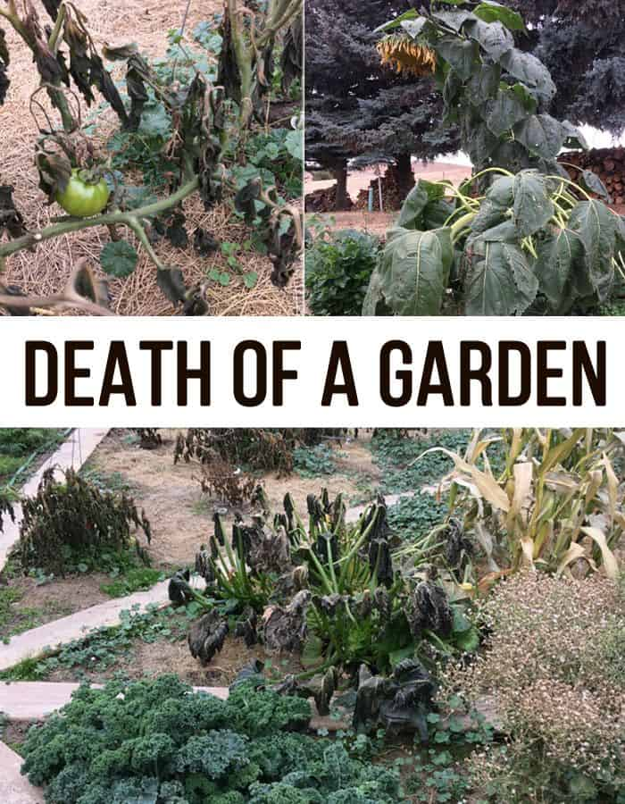 death of a garden pin