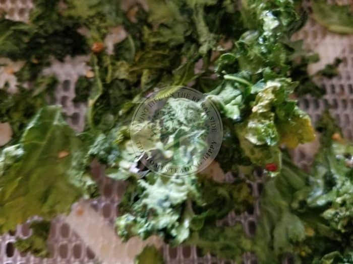 kale dehydrator chips