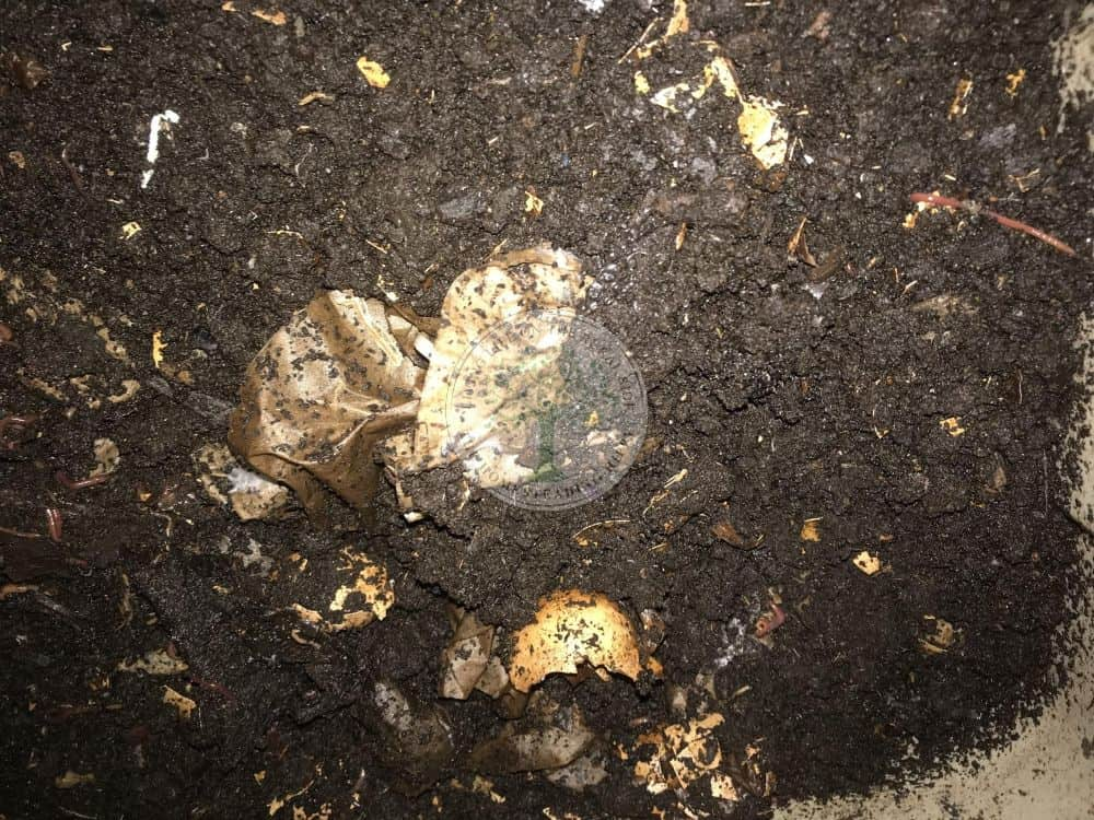 Eggshells and coffee grounds in a compost container