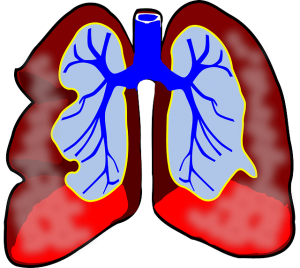 lungs diagram