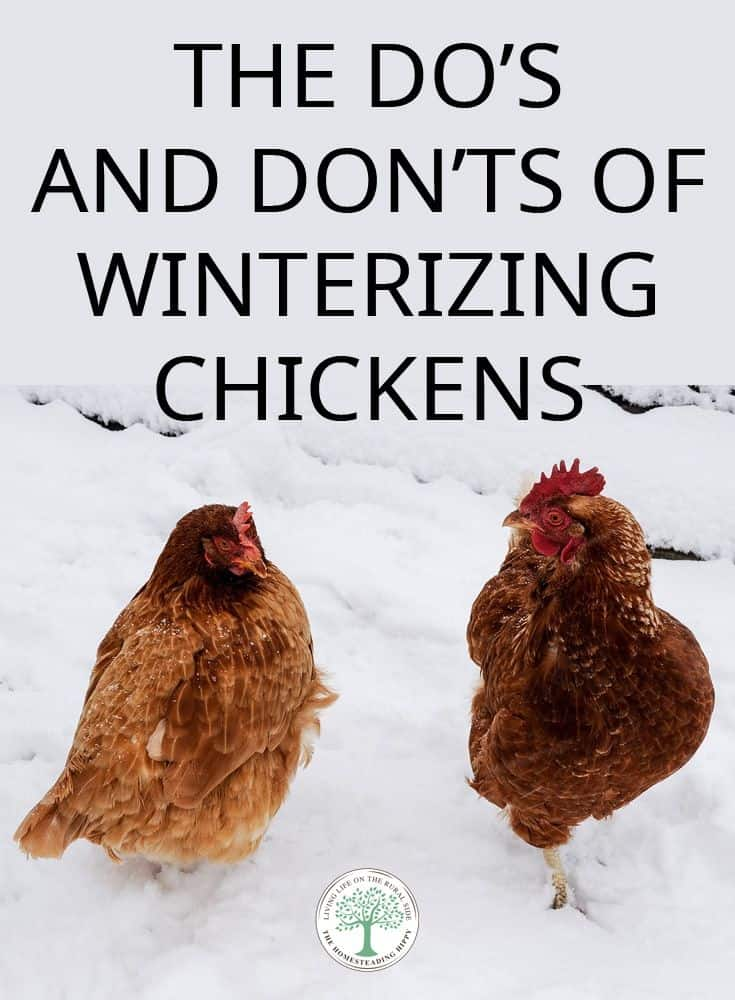 winterizing chickens pin