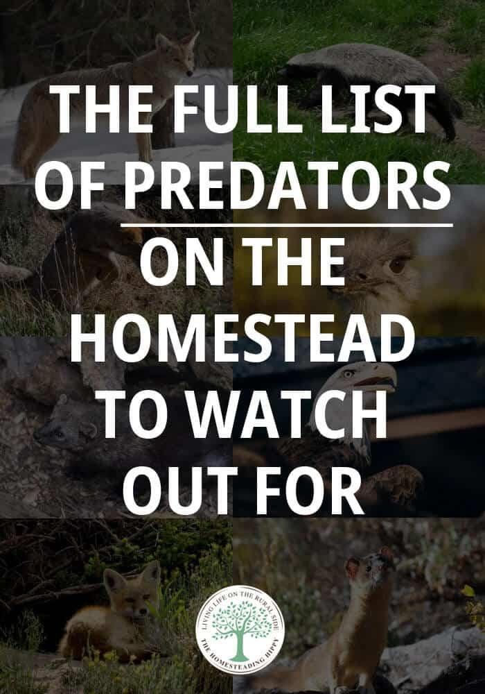 homestead predators pin image