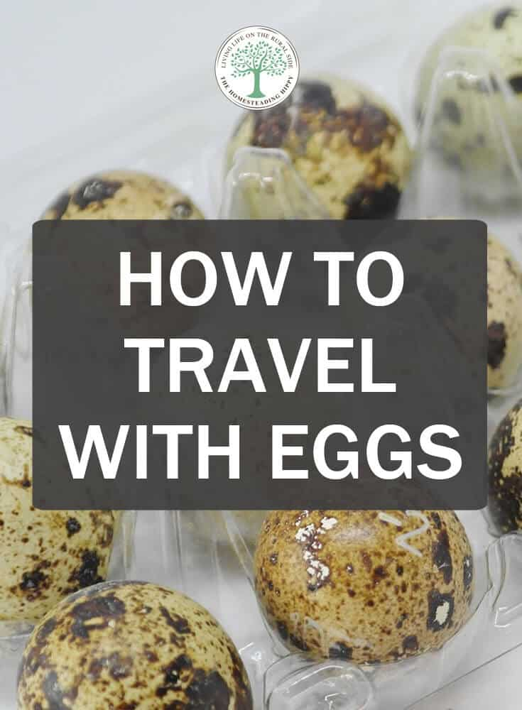 travel with eggs pin