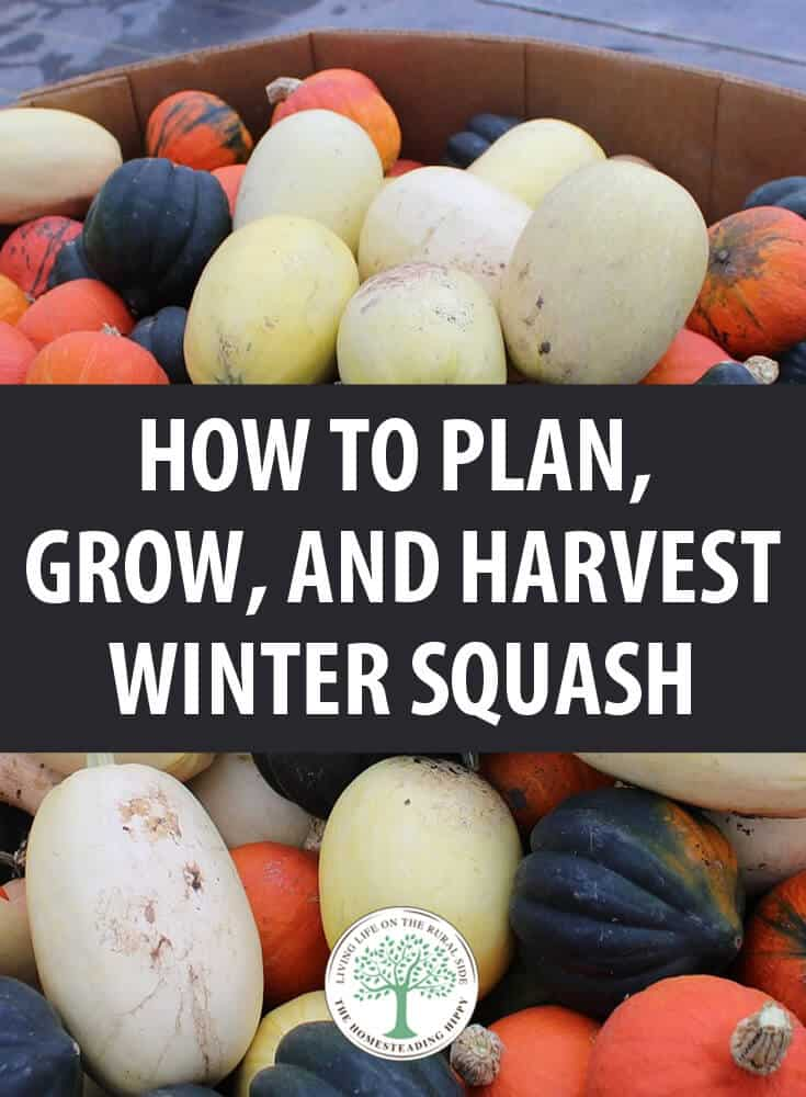 growing winter squash pin
