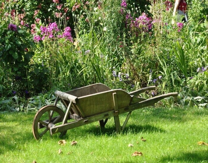 wheelbarrow in flower garden