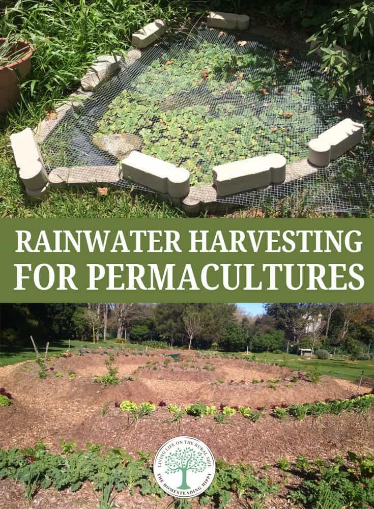 rainwater harvesting permaculture pin