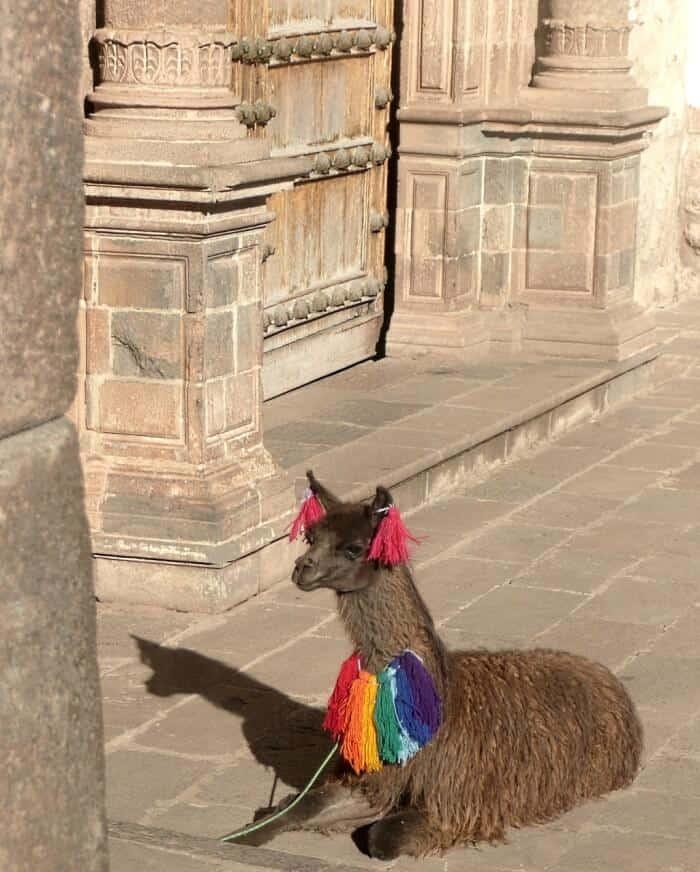 decorated alpaca