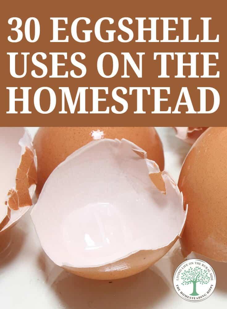 eggshell uses pin image