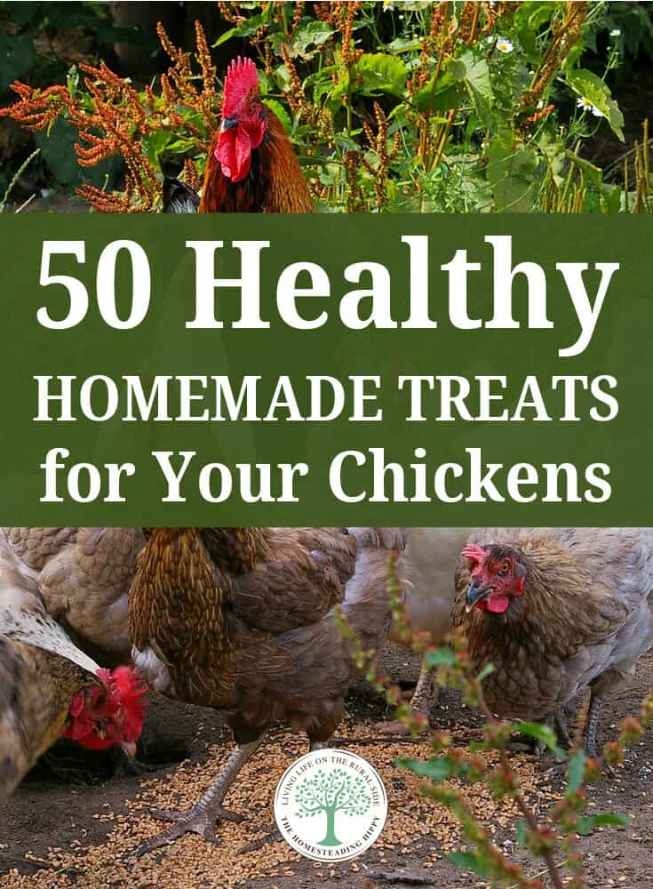 homemade chicken treats pins