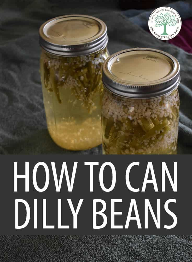 canning dilly beans pin