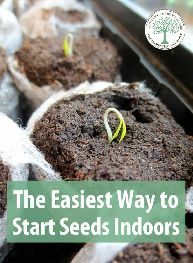 starting seeds indoors pin