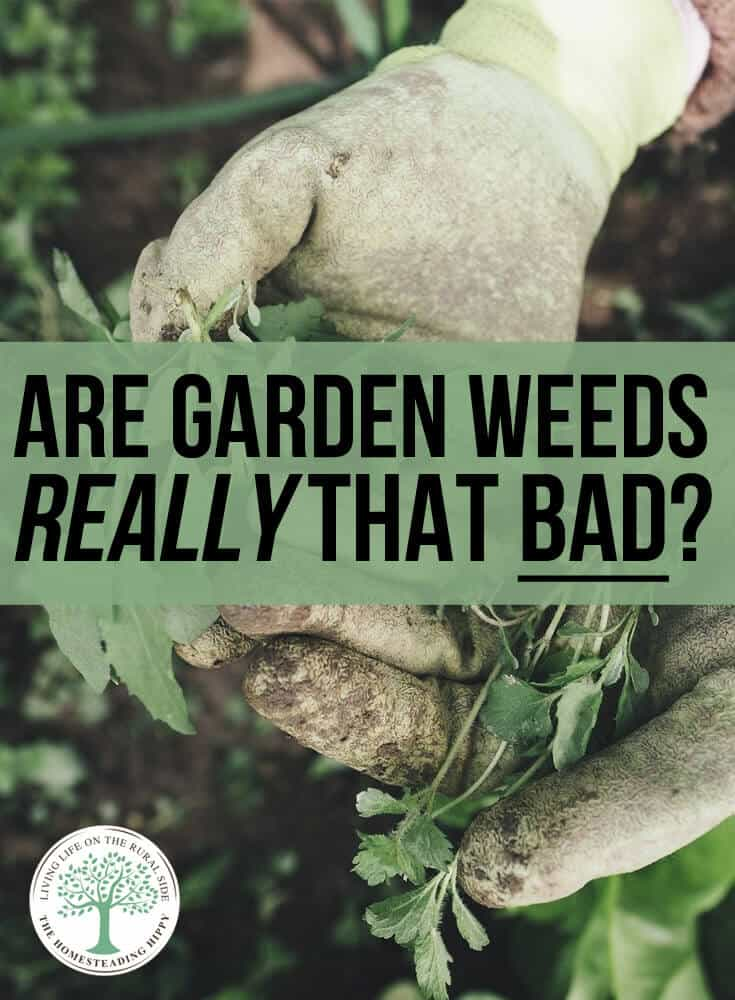 are garden weeds bad pin