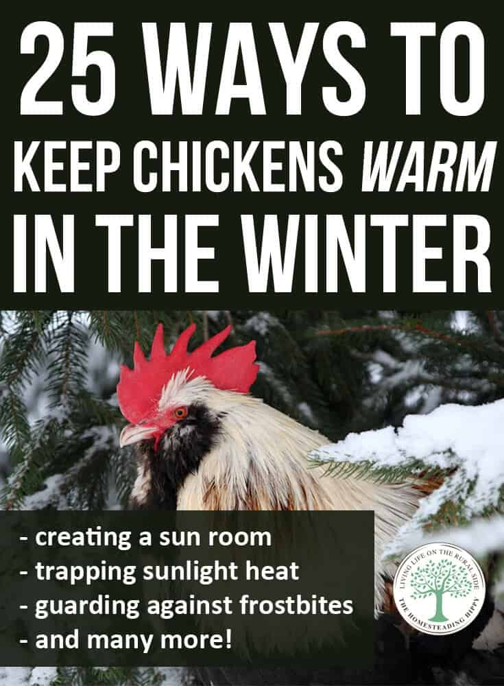 keeping chickens warm pin