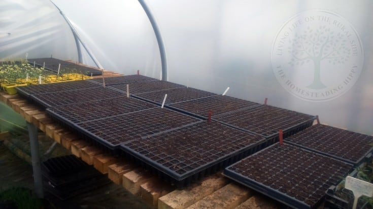 tables to grow seedlings