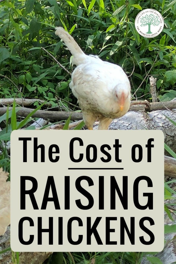 chickens costs pin